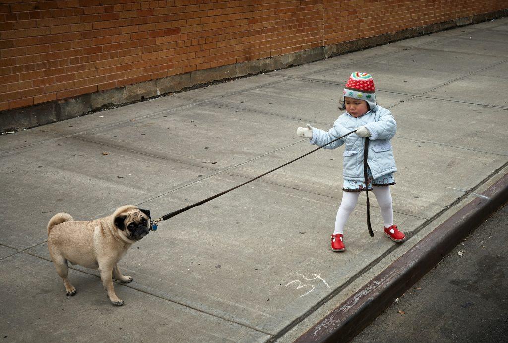 stubborn hard to train dog